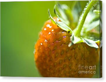 Perfect Fruit Of Summer Canvas Print by Heiko Koehrer-Wagner