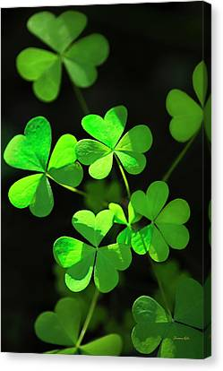 St Canvas Print - Perfect Green Shamrock Clovers by Christina Rollo
