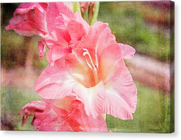 Perfect Pink Canna Lily Canvas Print by Toni Hopper
