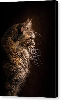 Perfect Profile Canvas Print by Robert Sijka