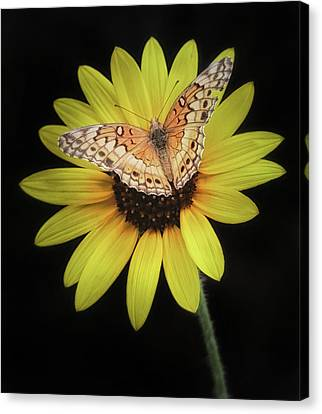 Perfect Timing Canvas Print