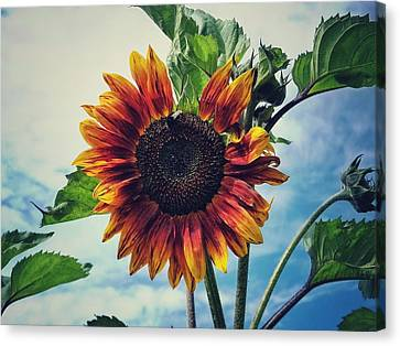 Perfectly Imperfect Canvas Print by Karen Stahlros