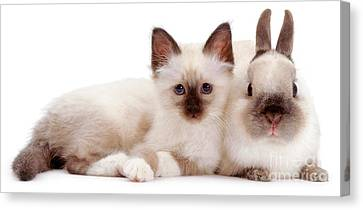 Perfectly Paired Pals Canvas Print