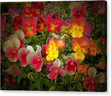 Radiance Pansies Canvas Print by Dorothy Berry-Lound