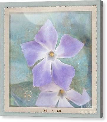 Periwinkle Stars Canvas Print by Cindy Garber Iverson