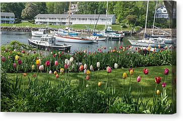 Perkins Cove Tulips Canvas Print by Joseph Smith