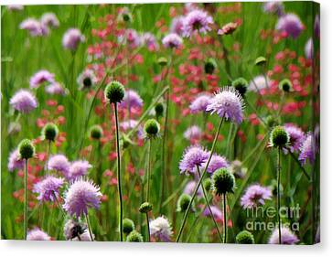Perky Chives Canvas Print by Betsy Zimmerli