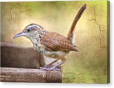 Perky Little Wren Canvas Print