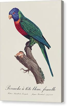 Perruche A Tete Bleue, Fem / Rainbow Lorikeet, Female - Restored 19th C. Illustration By Barraband Canvas Print by Jose Elias - Sofia Pereira