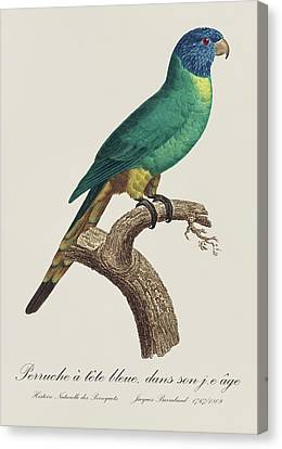 Perruche A Tete Bleue, Jeune / Rainbow Lorikeet, Young - Restored 19thc. Illustration By Barraband Canvas Print by Jose Elias - Sofia Pereira