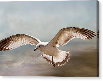 Sea Birds Canvas Print - Perseverance by Donna Kennedy
