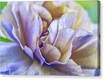 Canvas Print featuring the digital art Persian Blooming Buttercup by Julie Palencia