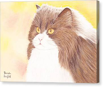 Persian Kitty Canvas Print by Brenda Bonfield
