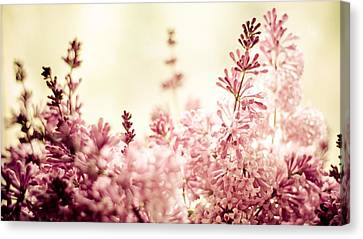 Persian Lilacs In The Sun Canvas Print by Maggie Terlecki