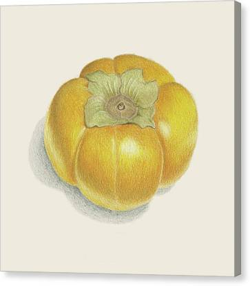 Persimmon Canvas Print by Carlee Lingerfelt