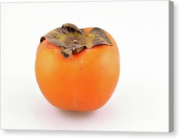 Persimmon Fruit Canvas Print