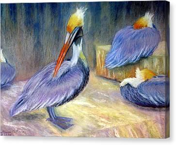 Peruvian Pelicans One  Pastel Canvas Print by Antonia Citrino