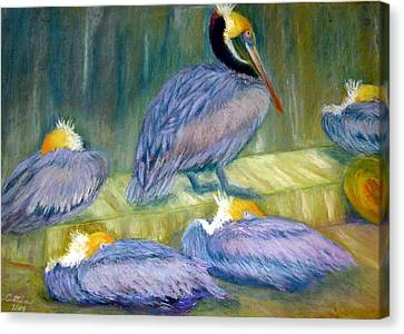 Canvas Print featuring the pastel Peruvian Pelicans Two Pastel by Antonia Citrino