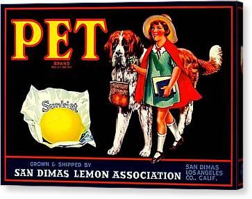 Pet Saint Bernard 1920s California Sunkist Lemons Canvas Print by Peter Gumaer Ogden