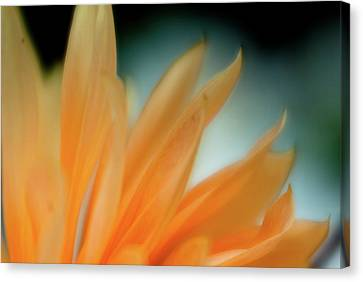 Canvas Print featuring the photograph Petal Disaray by Greg Nyquist