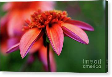 Petal Perfect Canvas Print by Sheila Ping