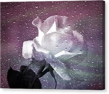 Petals And Drops Canvas Print by Julie Palencia