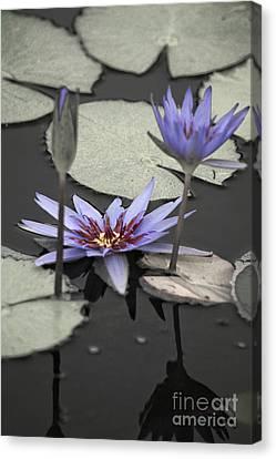 Petals Floating On Water Canvas Print by Ella Kaye Dickey