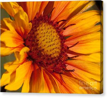 Petals Of Fire Canvas Print by Katie LaSalle-Lowery