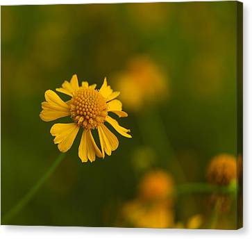 Petals Of Nature Canvas Print by Christopher L Thomley