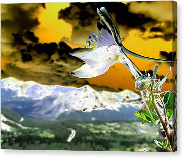 Petals To The Sky Canvas Print by Peter  McIntosh