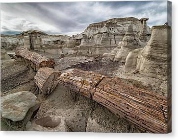 Petrified Remains Canvas Print by Alan Toepfer