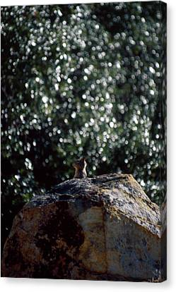 Petros Or Petra? Canvas Print by Soli Deo Gloria Wilderness And Wildlife Photography