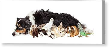Pets Together On White Banner Canvas Print