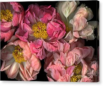 Petticoats Canvas Print by Christian Slanec