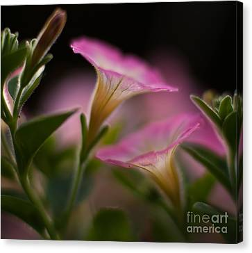 Petunia Joining Canvas Print