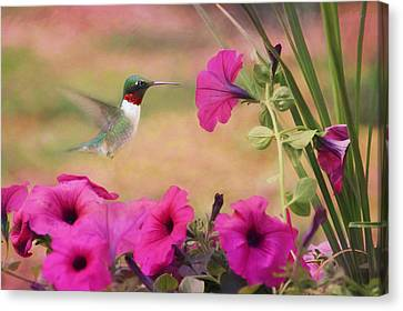Petunia Lover Canvas Print by Lori Deiter