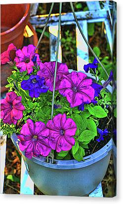 Canvas Print - Petunia - Photopainting by Allen Beatty