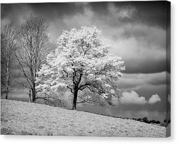 Petworth Tree Canvas Print by Michael Hope