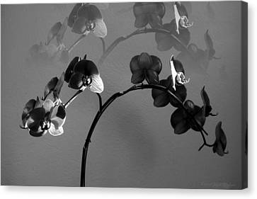 Phalaenopsis Orchcid In Black And White Refracted Canvas Print