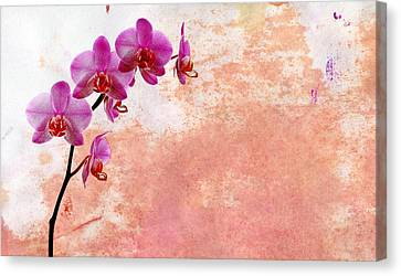 Phalaenopsis Orchid Pink Canvas Print by Mark Rogan