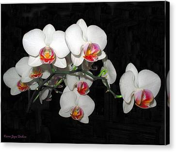 Phalaenopsis Orchids Canvas Print by Joyce Dickens