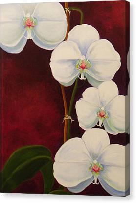 Phaleanopsis Canvas Print