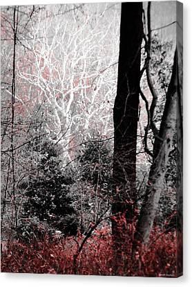 Phantasm In Wildwood Canvas Print