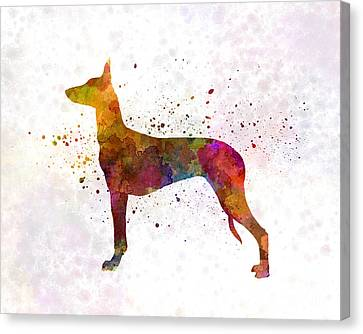 Pharaoh Hound In Watercolor Canvas Print by Pablo Romero