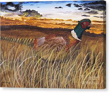 Pheasant At Sunset Canvas Print