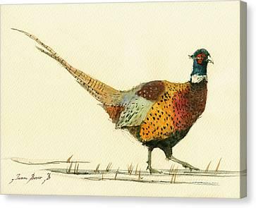 Pheasant Bird Art Canvas Print by Juan  Bosco