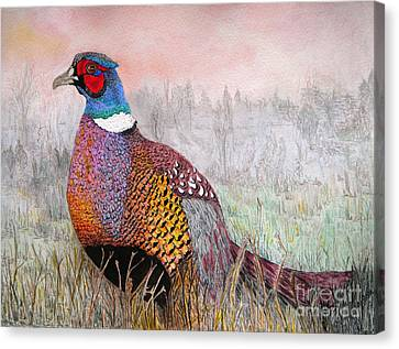 Pheasant Dawn Canvas Print by Yvonne Johnstone
