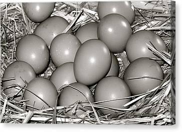 Pheasant Eggs Canvas Print by Karon Melillo DeVega