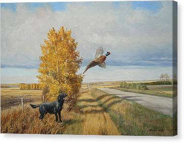 Pheasant Flush Canvas Print by Norman Kelly