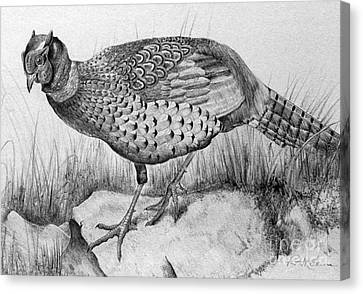 Pheasant In The Wild Canvas Print by Roy Anthony Kaelin